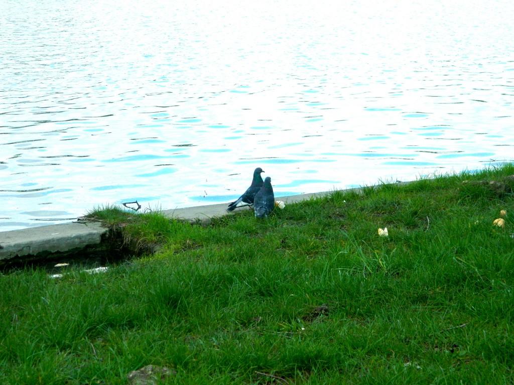romanta in parcul tineretului