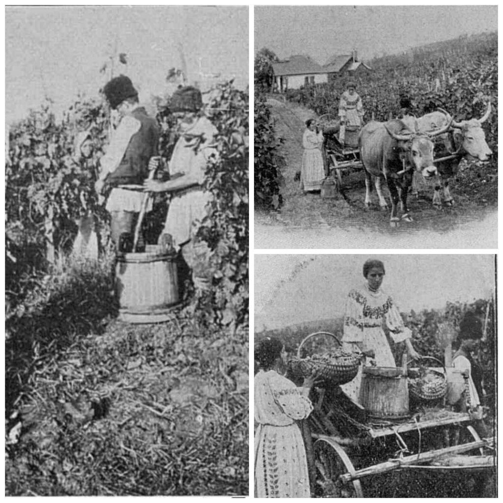 """Sursa: """"Bucuresti in 1906"""", de Frédéric Damé"""