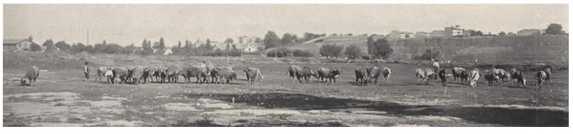 Campia si Dealul Filaret in 1905, L Illustration, 29 sept. 1906