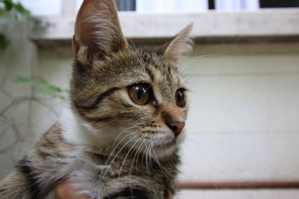 pisici-sectorul-4