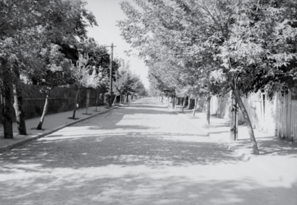 Strada Putul cu Tei