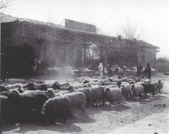șoseaua Olteniței